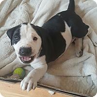 Adopt A Pet :: Memphis - Homer, NY