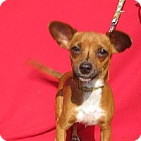 Adopt A Pet :: OCTAVIA - Elk Grove, CA