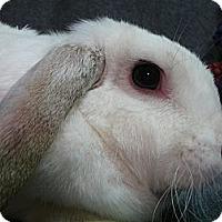Adopt A Pet :: Ellie Mae - Newport, DE
