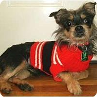 Adopt A Pet :: Peanut - Mooy, AL