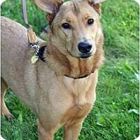 Adopt A Pet :: Nic - Racine, WI
