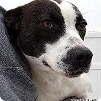 Adopt A Pet :: JENNA - Dallas, NC