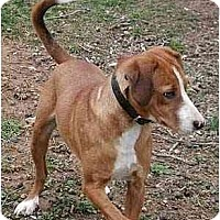Adopt A Pet :: Tess - Byrdstown, TN