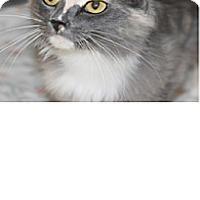 Adopt A Pet :: Ivy - El Cajon, CA
