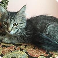 Adopt A Pet :: Jack - East Hanover, NJ