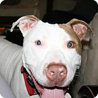 Adopt A Pet :: Foster - Kimberton, PA