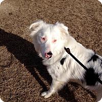 Adopt A Pet :: Noah - Barnwell, SC