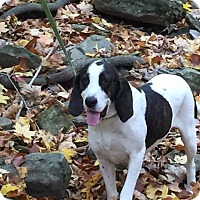 Adopt A Pet :: Zoey (2) - mooresville, IN