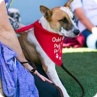 Adopt A Pet :: Miss Phryne Fisher - Los Angeles, CA