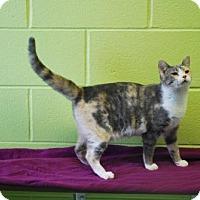 Adopt A Pet :: Junebug - Dublin, VA