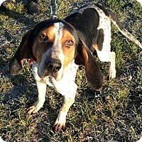 Adopt A Pet :: Blue jay - Cincinnati, OH
