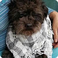 Adopt A Pet :: Harry - Baileyton, AL