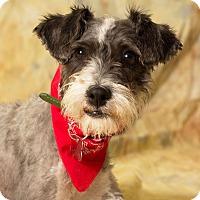 Adopt A Pet :: Roulette - Gilbert, AZ