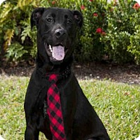 Adopt A Pet :: SMALLS - West Palm Beach, FL