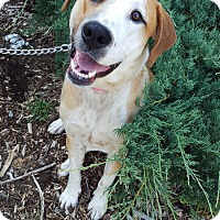 Hound (Unknown Type) Mix Dog for adoption in Youngsville, North Carolina - Chance