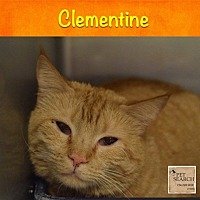 Adopt A Pet :: Clementine - Washington, PA