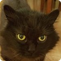 Adopt A Pet :: Mittens and Frosty - Medford, MA