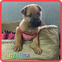 Adopt A Pet :: Angelina Lardy - Hollywood, FL