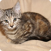 Adopt A Pet :: Cameo (Orphan w/Bella) - Marietta, OH
