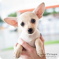 Adopt A Pet :: Kylie - Frisco, TX
