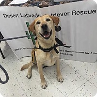Adopt A Pet :: Jams - Phoenix, AZ