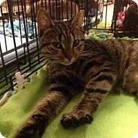 Adopt A Pet :: Minerva McGonagall - Ephrata, PA