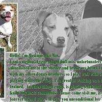 Adopt A Pet :: Max - Watauga, TX