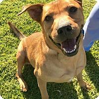Adopt A Pet :: Missy - Agoura Hills, CA
