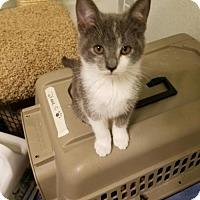 Adopt A Pet :: Minnie - San Jose, CA