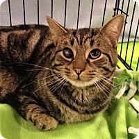 Adopt A Pet :: Otter - URGENT - Jenkintown, PA