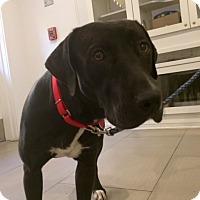 Adopt A Pet :: Agatha - Santa Monica, CA