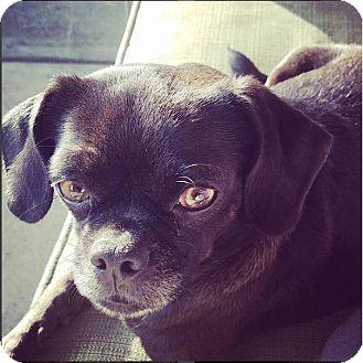 French Bulldog/Pug Mix Dog for adoption in Monrovia, California - Tallulah