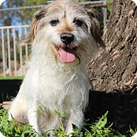 Adopt A Pet :: Shelby - Campbell, CA