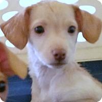 Adopt A Pet :: Flounder - Phoenix, AZ