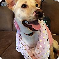 Adopt A Pet :: Eliza - Memphis, TN