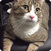 Adopt A Pet :: Zachary - Chaska, MN