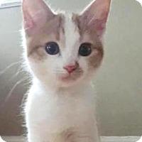 Adopt A Pet :: Blossom - Walworth, NY