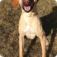 Adopt A Pet :: Peter - Lafayette, NJ