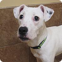 Adopt A Pet :: Lucas - Appleton, WI