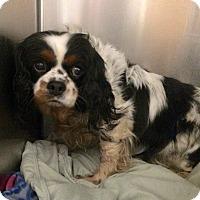 Adopt A Pet :: Jillian - Oak Ridge, NJ