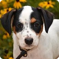 Adopt A Pet :: Baby Madison - Marlton, NJ