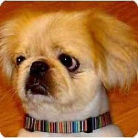 Adopt A Pet :: Jackson - Mays Landing, NJ