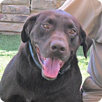 Adopt A Pet :: Cedar - white settlment, TX