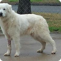 Adopt A Pet :: Carmenere - Ascutney, VT