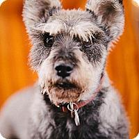 Adopt A Pet :: Maty - Portland, OR