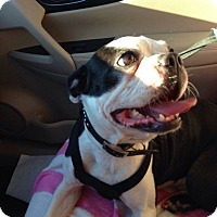 Adopt A Pet :: Hank - Weatherford, TX