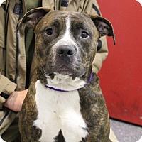 Adopt A Pet :: Ralphie-Prison Dog - Elyria, OH