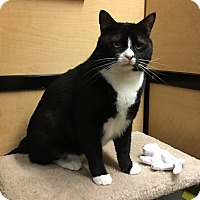 Adopt A Pet :: Tyler - Riverside, CA