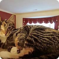 Adopt A Pet :: Lulu - Colmar, PA