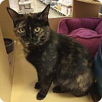 Adopt A Pet :: Lacy - Monroe, GA